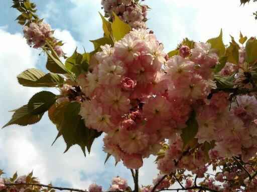 20 mars premier jour du printemps place nette conseil et assistance en rangement paris - 1er jour du printemps ...